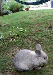 bunny18 (2)