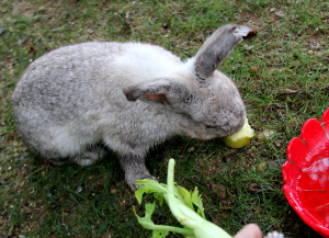 bunny19