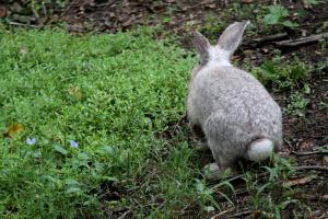 bunny8 (2)