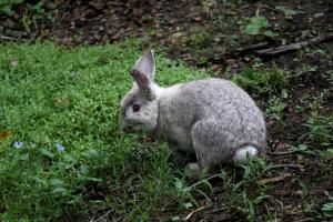 bunny8